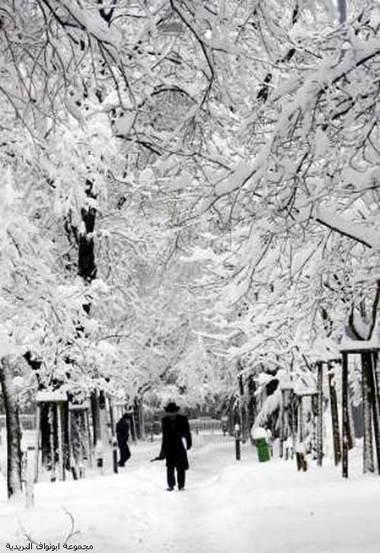انا الثلج الابيض 42235.jpeg