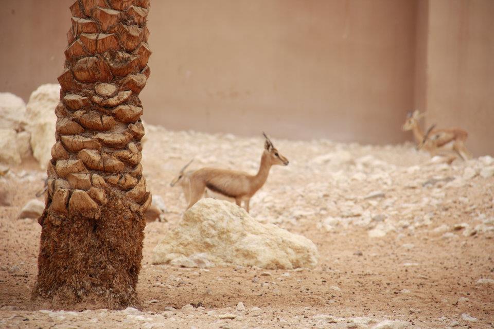 الحيوانات الامارات 53438.jpg
