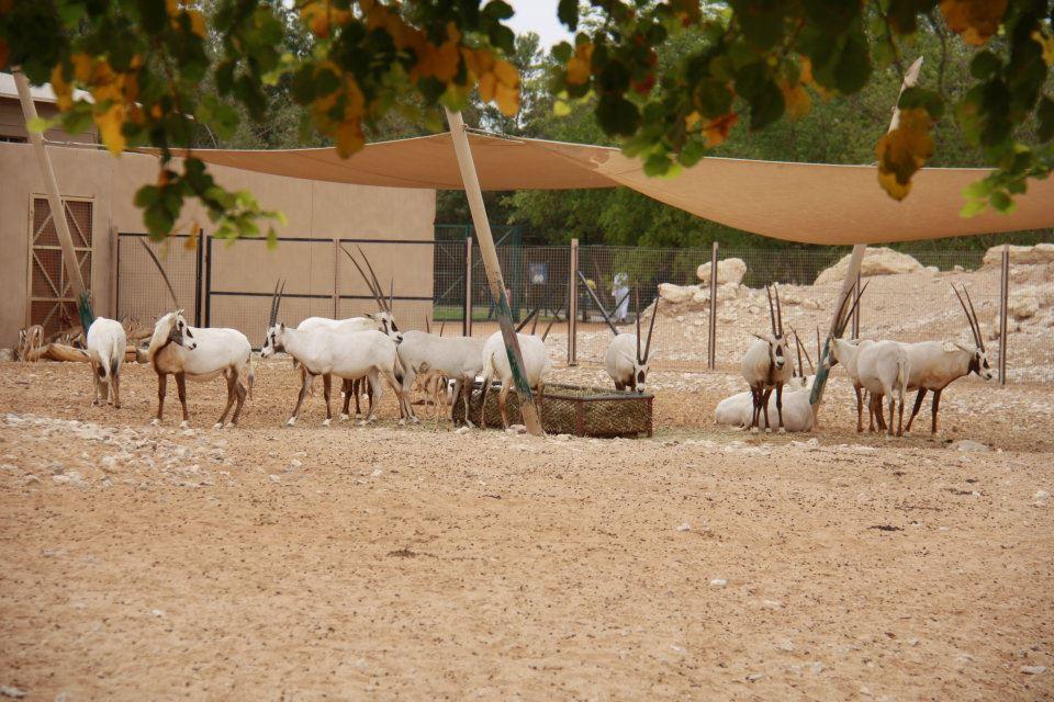 الحيوانات الامارات 53439.jpg