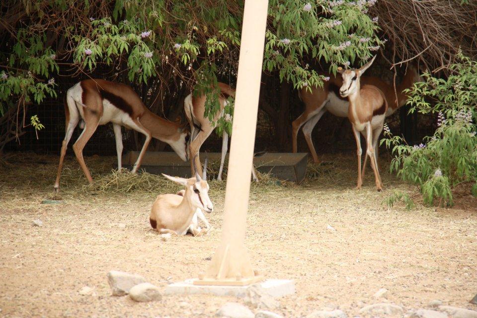 الحيوانات الامارات 53444.jpg