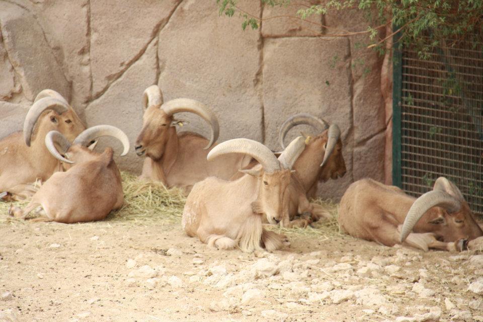 الحيوانات الامارات 53449.jpg