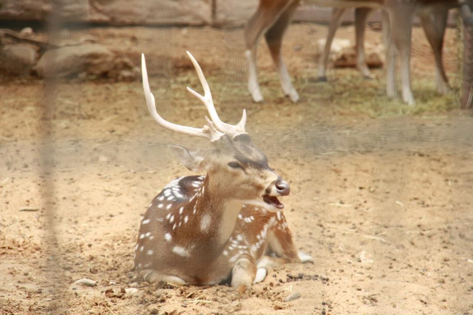 الحيوانات الامارات 53450.jpg