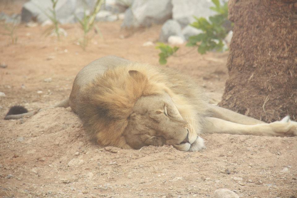 الحيوانات الامارات 53453.jpg