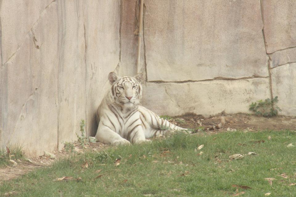 الحيوانات الامارات 53455.jpg