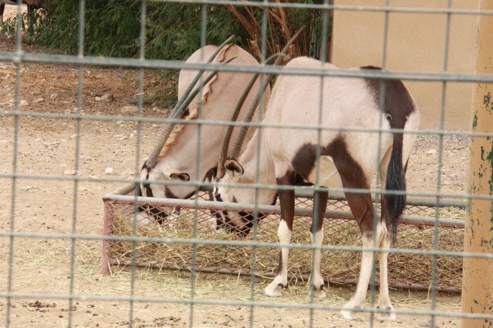 الحيوانات الامارات 53463.jpg