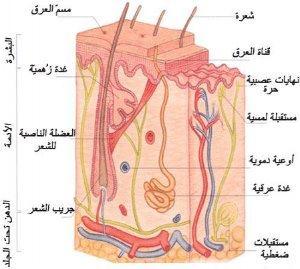 أسباب وطرق علاج نمو الشعرة تحت الجلد 64738.jpg