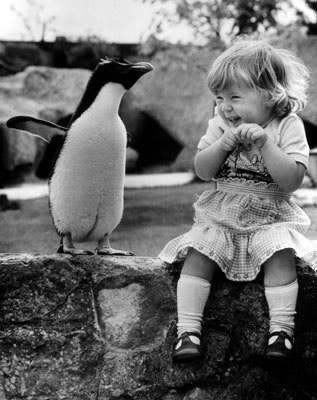 الحيوانات الصداقة والعاطفة الحيوانات 2013 117449.jpg