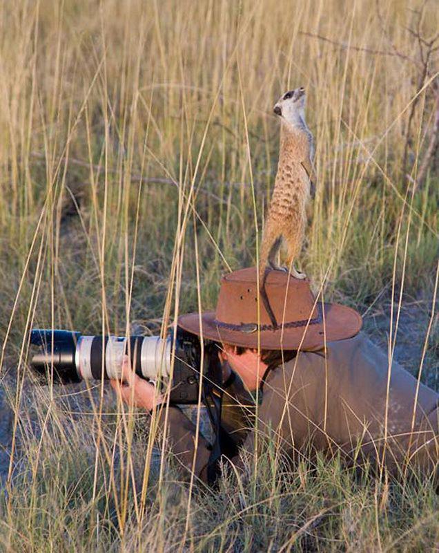 الحيوانات الصداقة والعاطفة الحيوانات 2013 117471.jpg