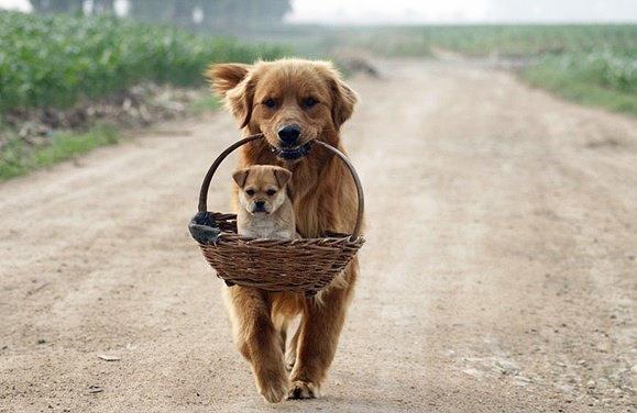 الحيوانات الصداقة والعاطفة الحيوانات 2013 117477.jpg
