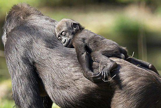 الحيوانات الصداقة والعاطفة الحيوانات 2013 117480.jpg
