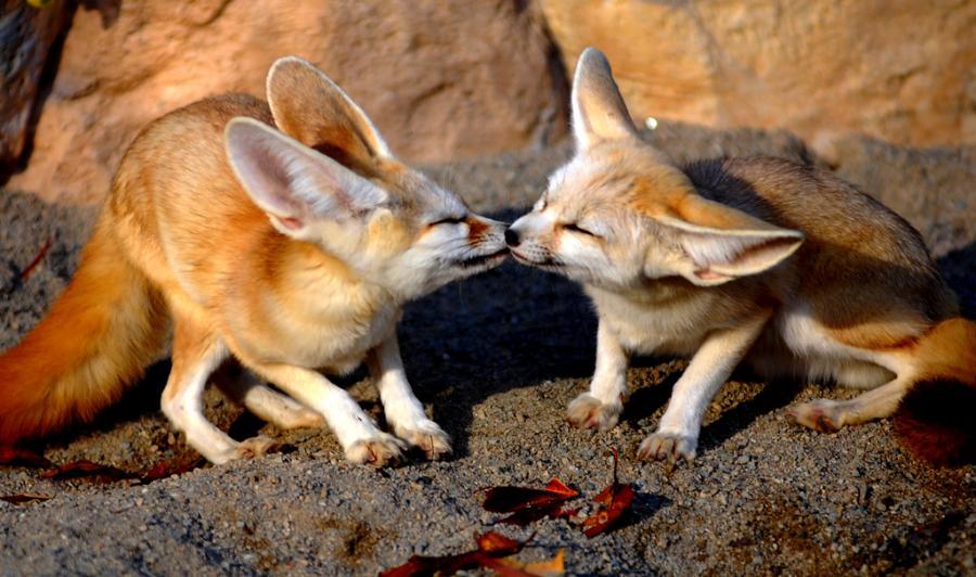الحيوانات الصداقة والعاطفة الحيوانات 2013 117483.jpg