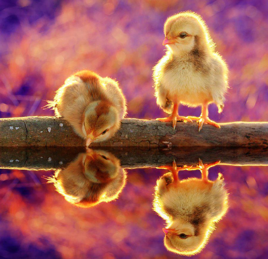 الحيوانات الصداقة والعاطفة الحيوانات 2013 117491.jpg