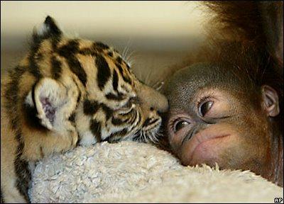 الحيوانات الصداقة والعاطفة الحيوانات 2013 117494.jpg
