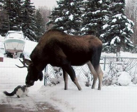 الحيوانات الصداقة والعاطفة الحيوانات 2013 117496.jpg