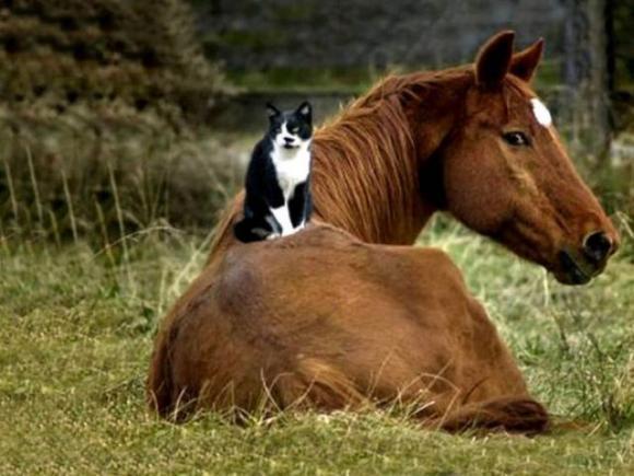 الحيوانات الصداقة والعاطفة الحيوانات 2013 117497.jpg