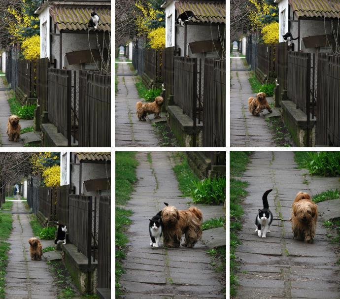 الحيوانات الصداقة والعاطفة الحيوانات 2013 117499.jpg