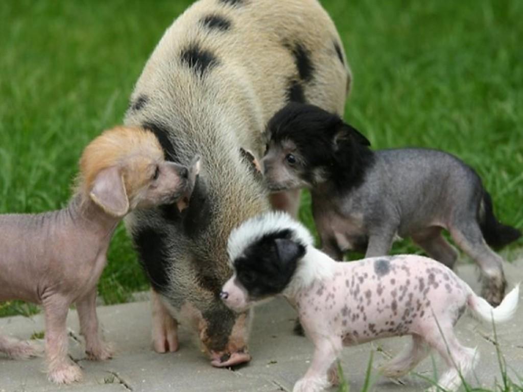 الحيوانات الصداقة والعاطفة الحيوانات 2013 117500.jpg