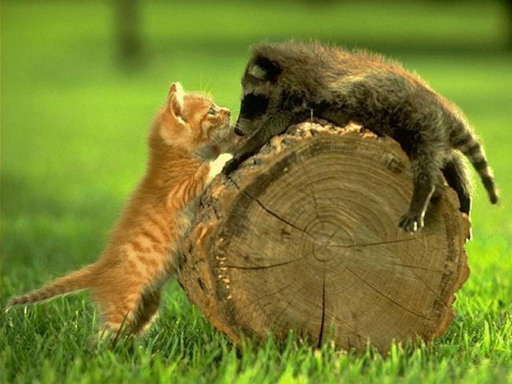 الحيوانات الصداقة والعاطفة الحيوانات 2013 117507.jpg
