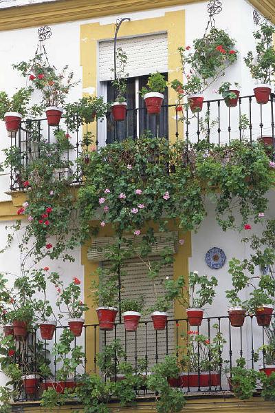 بلكونات بيوتنا الجميلة 134472.jpg