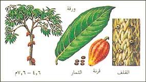 الكاكاو بالصور,معلومات الكاكاو,مراحل الشيكولاته 191995.jpg