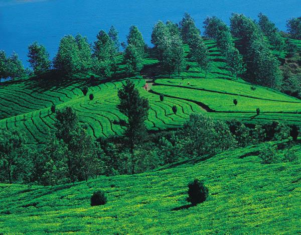 ,السياحة الهند,مدينة 261726.jpg