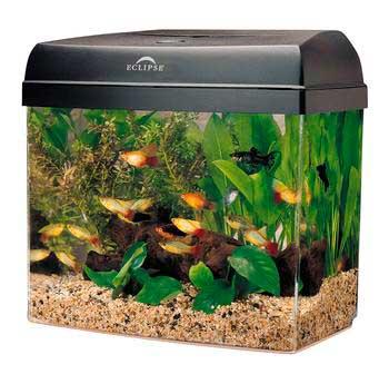 اشكال جميله ومميزه من أحواض السمك 275643.jpg