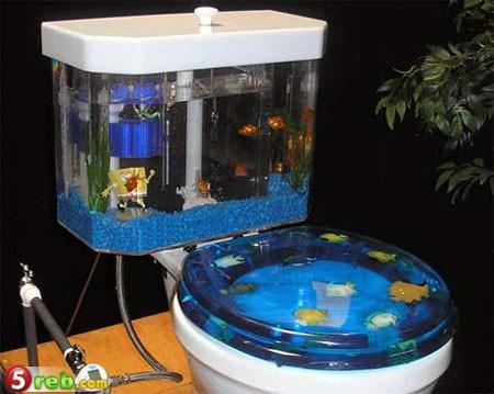 اشكال جميله ومميزه من أحواض السمك 275650.png