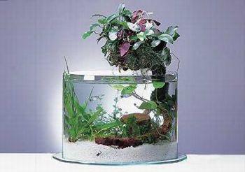 اشكال جميله ومميزه من أحواض السمك 275695.jpg