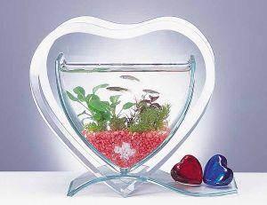 اشكال جميله ومميزه من أحواض السمك 275701.jpg