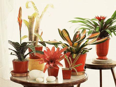 النباتات النباتات 276207.jpg