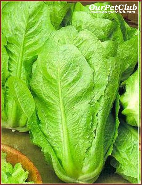 القيم الغذائية في الخضروات وفوائدها ومضارها 302554.jpg