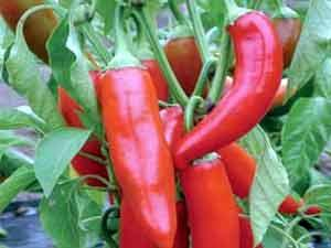 القيم الغذائية في الخضروات وفوائدها ومضارها 302558.jpg