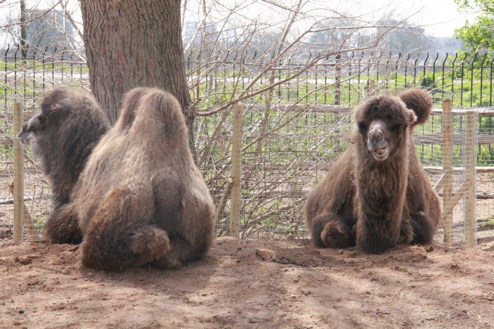 الحيوانات London 302873.jpg