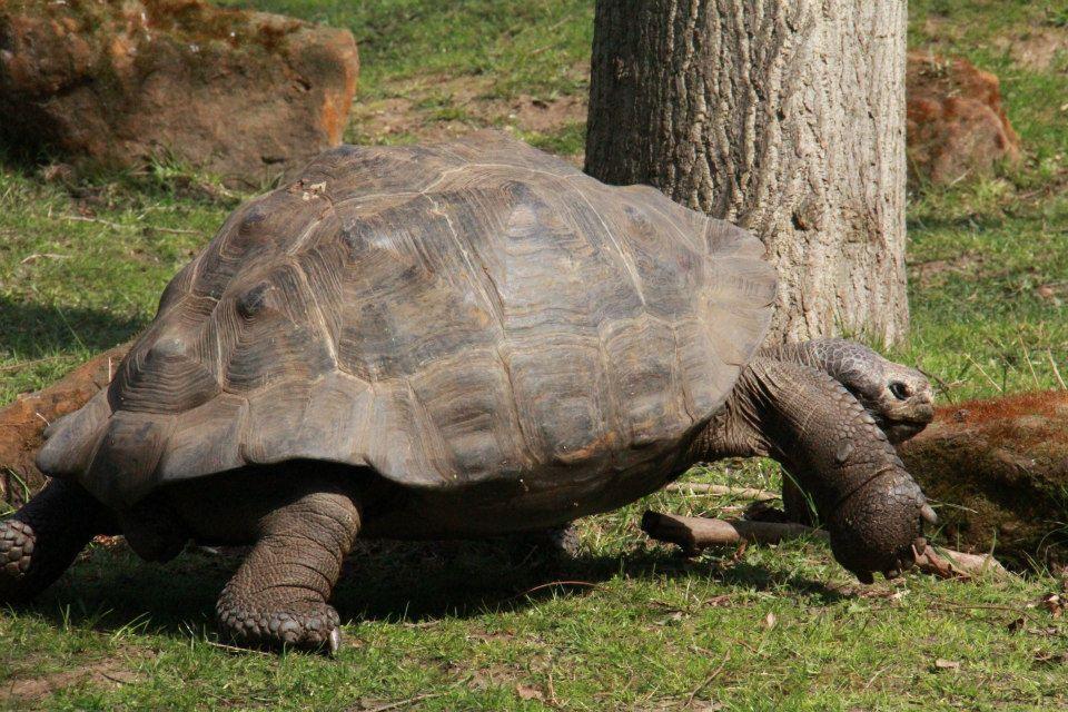الحيوانات London 302875.jpg