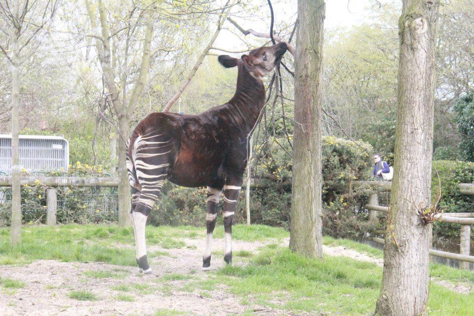 الحيوانات London 302893.jpg