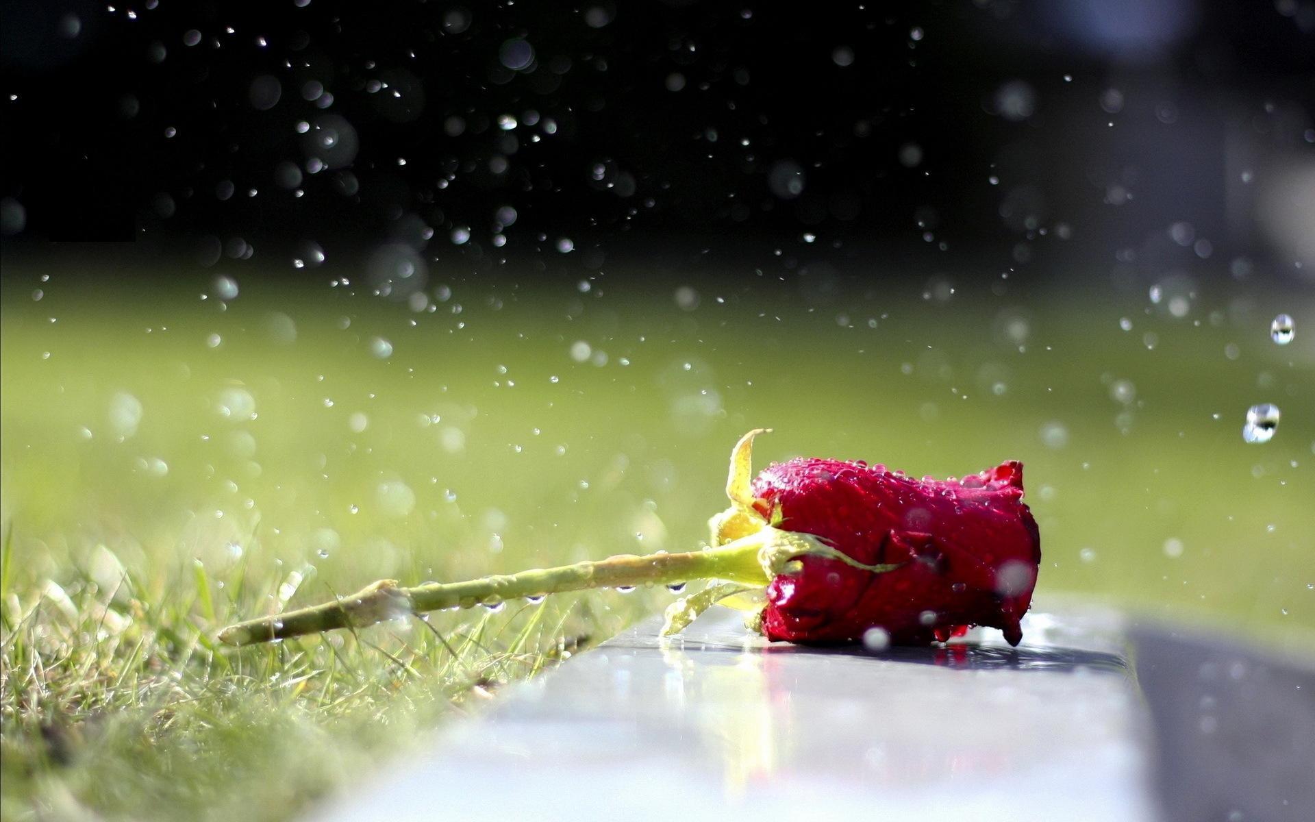 اجمل صور الازهار لخلفية رائعة لجهازك مجتمع رجيم