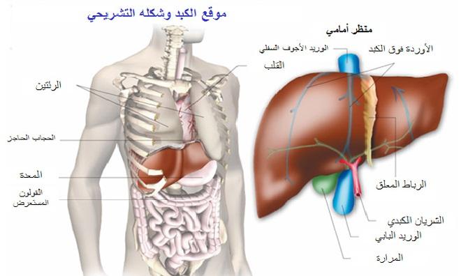 الفيروسى الاعراض,طرق المرض,العلاج 307889.jpg