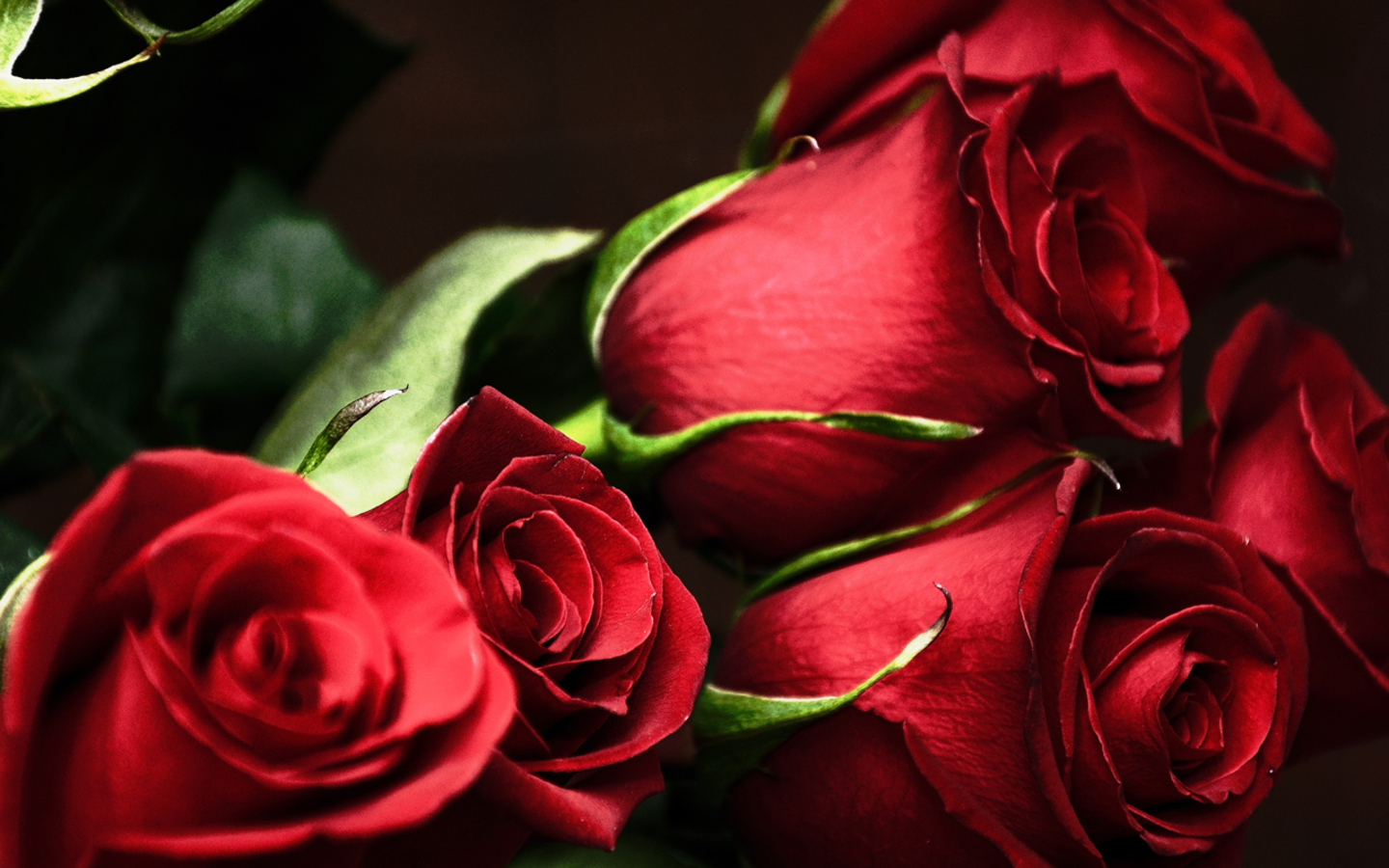 red rose i love you wallpaper - photo #49