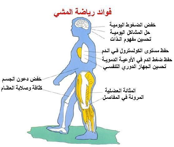 نصائح للتخلص من الكرش وتمارين لعلاج للمصابين بالكرش 331198.jpg