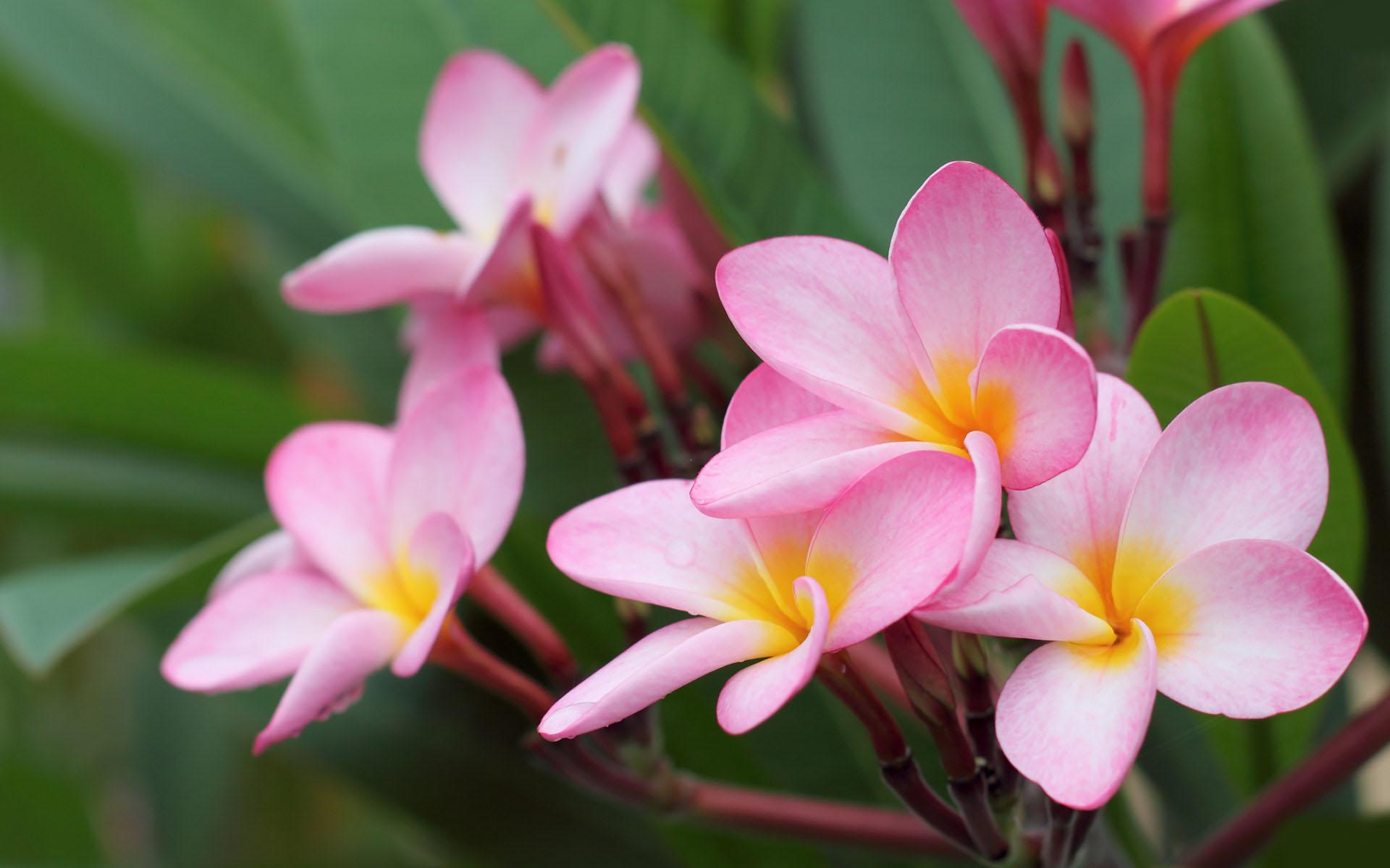 بالبينك والاحمر والاورانج صور اجمل الورود الطبيعيه لعيونكم
