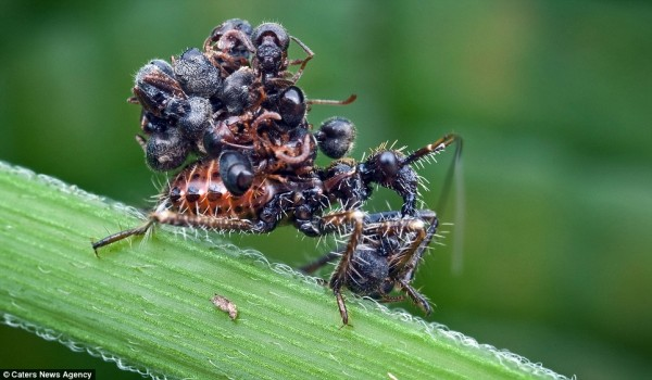 القاتلة المحترفة ضحاياها الحشرات 431971.jpg