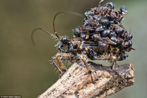 القاتلة المحترفة ضحاياها الحشرات 431972.jpg