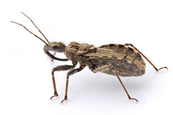 القاتلة المحترفة ضحاياها الحشرات 431973.jpg