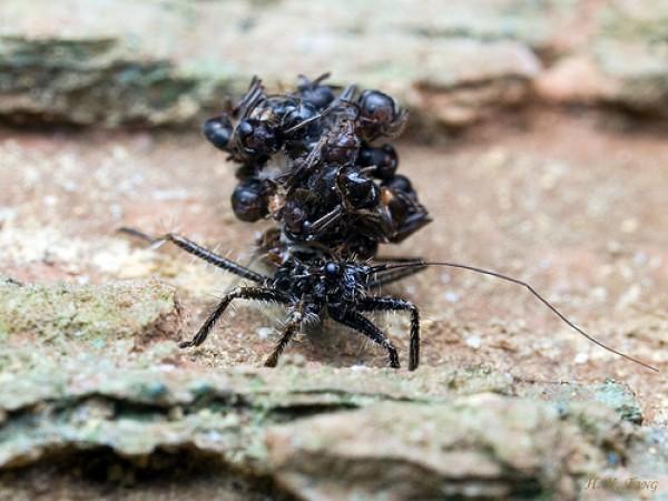 القاتلة المحترفة ضحاياها الحشرات 431975.jpg