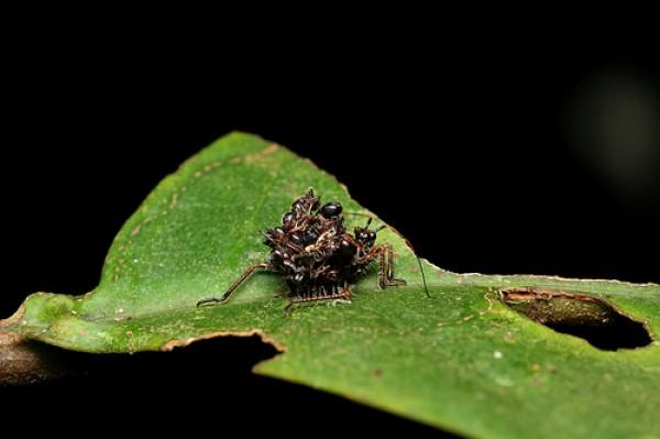 القاتلة المحترفة ضحاياها الحشرات 431977.jpg