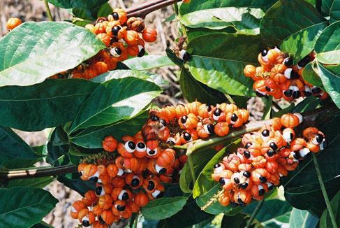 نبات ذات عيون تنظر اليك...سبحان الله 441406.jpg