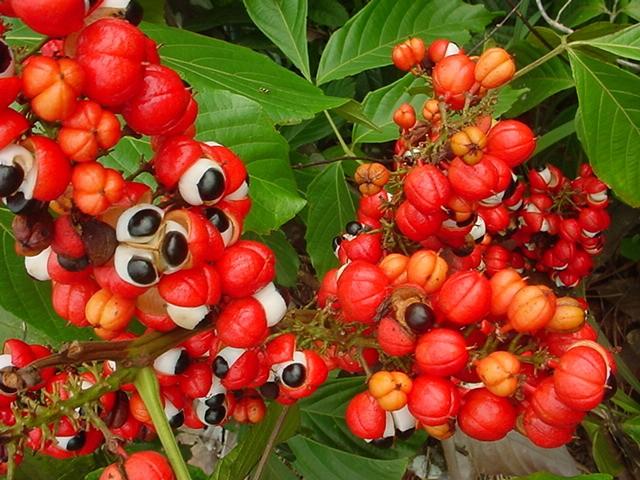 نبات ذات عيون تنظر اليك...سبحان الله 441407.jpg