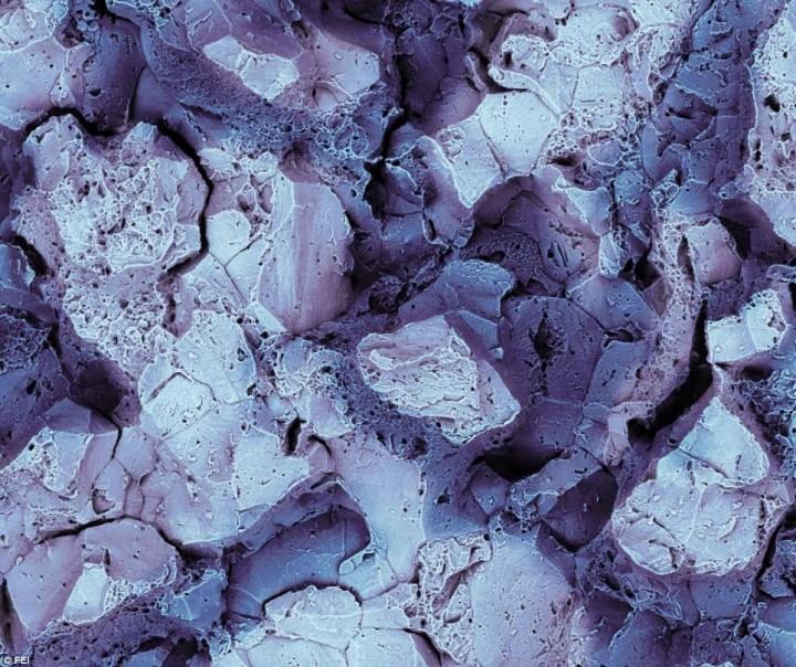 ميكروسكوبية 445940.jpg