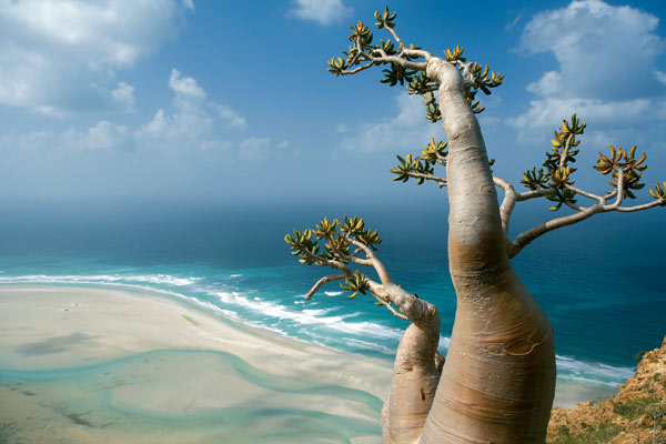 نتيجة بحث الصور عن خيال جزيرة سقطرى